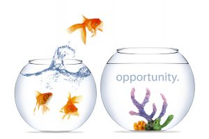 Opportunity Knocks Your Doors